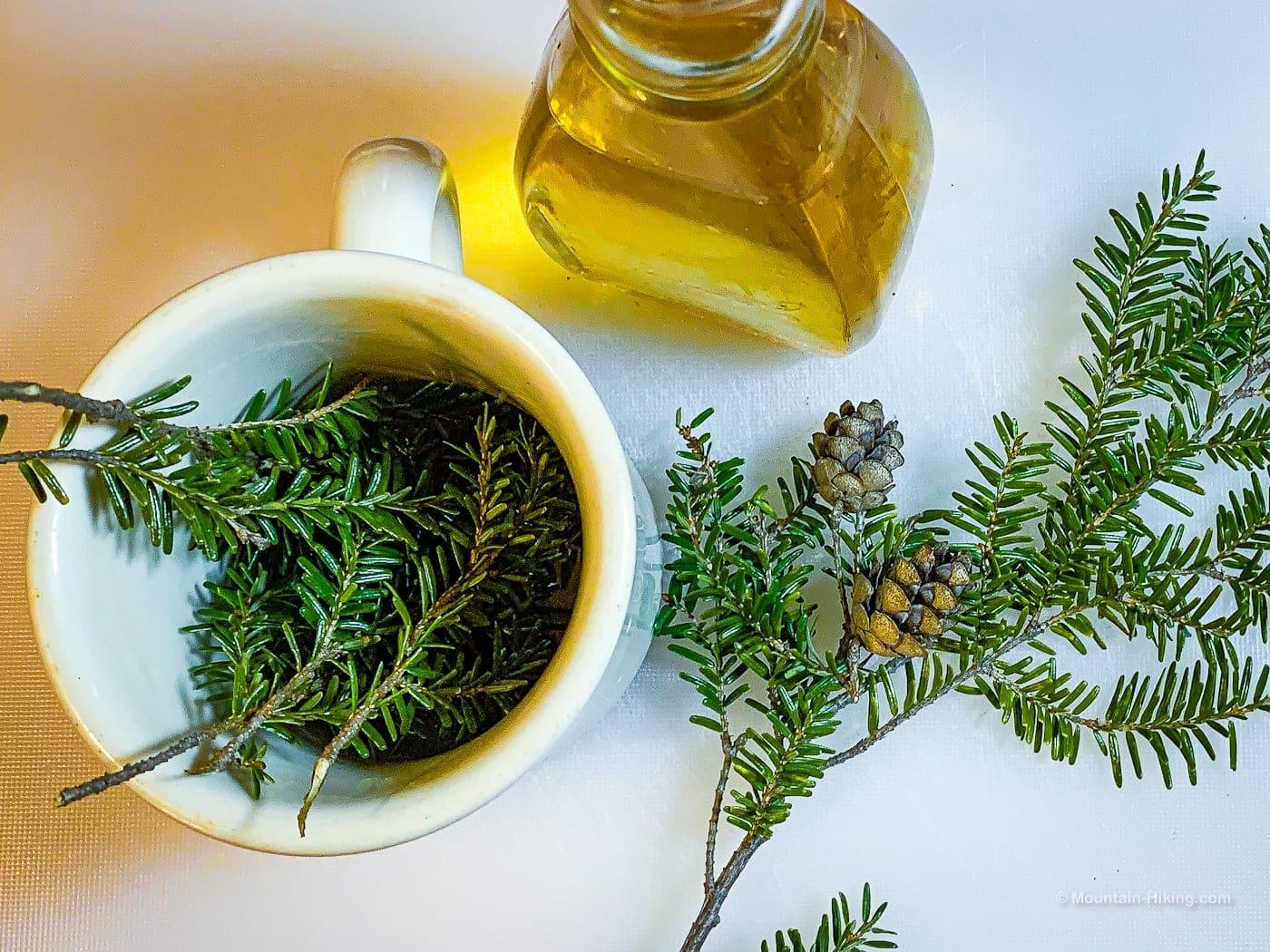 preparing to brew pine needle tea: hemlock twigs in ceramic mug