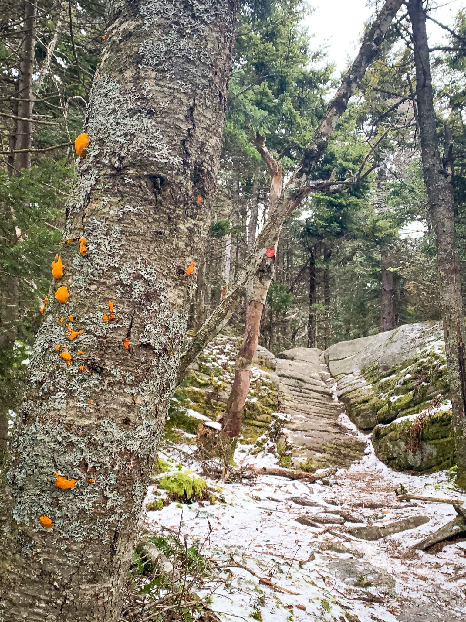 orange fungus on tree trunk
