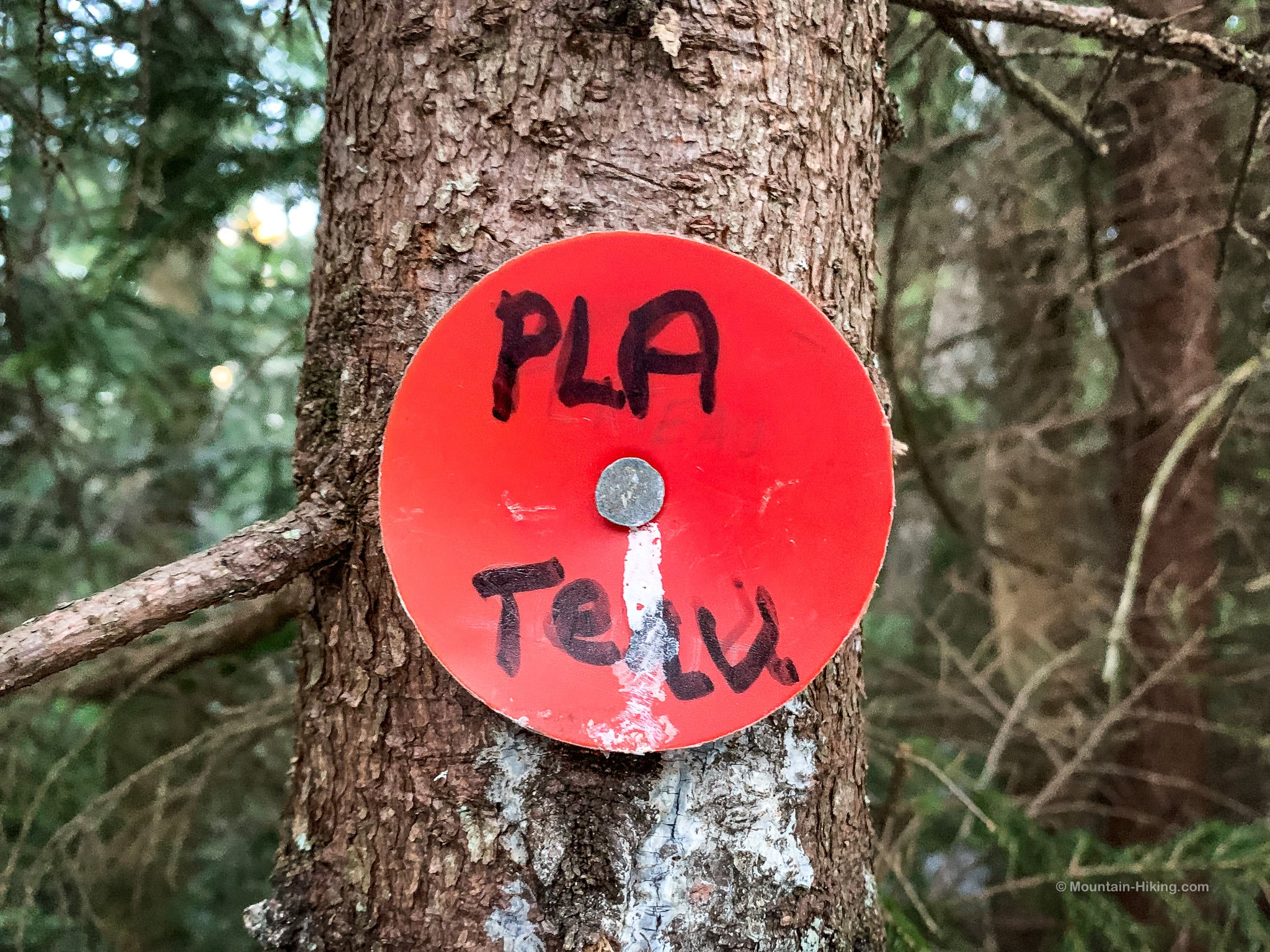red plastic summit marker on young tree trunk