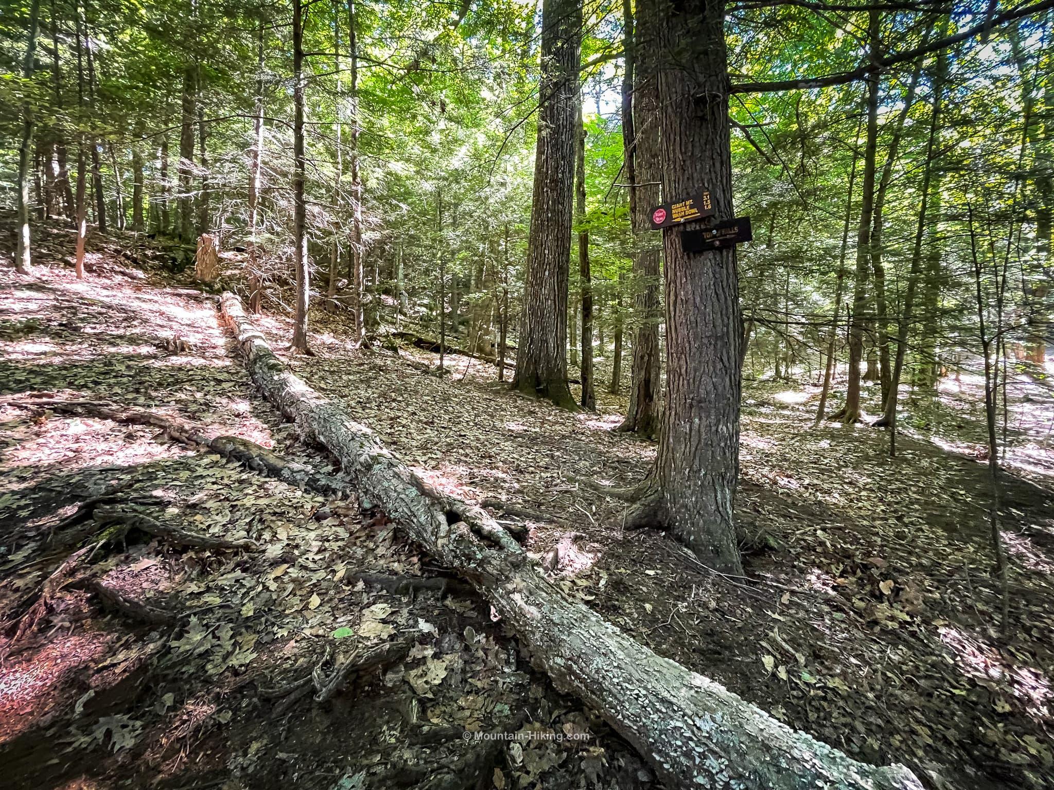 roaring brook falls upper junction trail sign