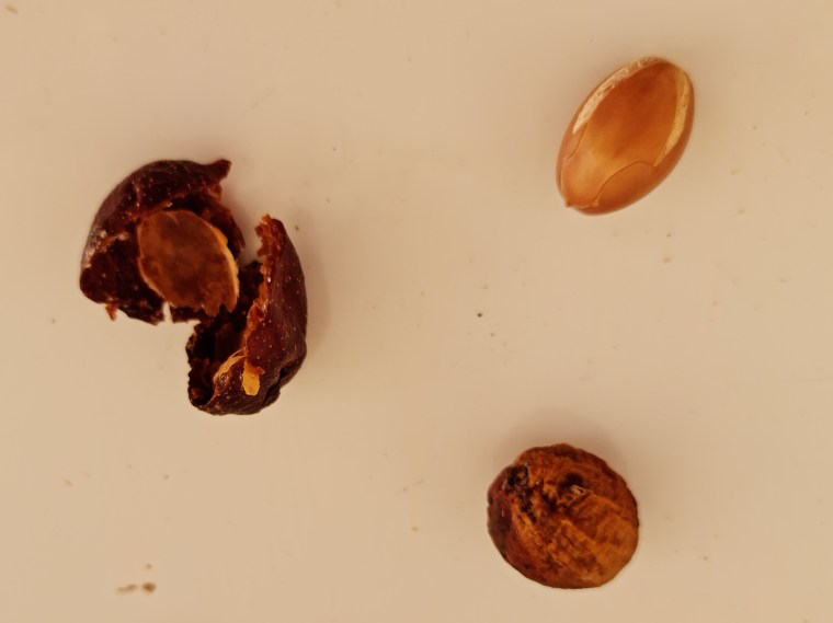 Argan oil begins with the fruit