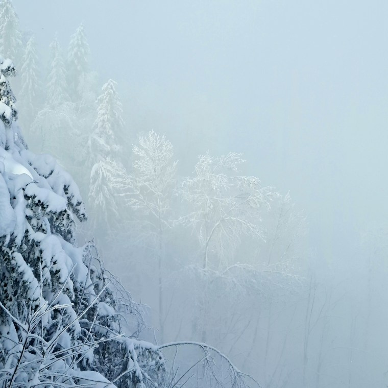 Snow-covered trees swallowed by clouds