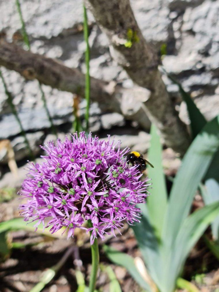 Bees hard at work pollinating