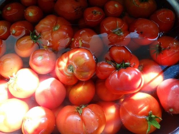 tomatoes being washed