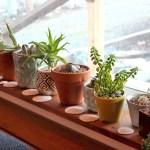 Succulent Grow Light Recommendations Mountain Crest Gardens