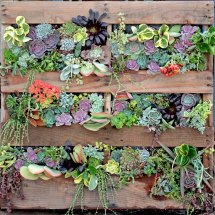 Diy Succulent Living Wall Wood Pallet - Employee