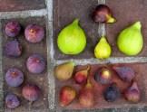 violet-sepor-peters-honey-emerald-strawberry-hunt-improved-celeste-tiger-9