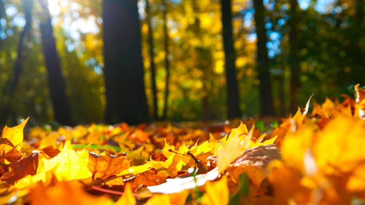 Ayurveda in the Fall & Winter