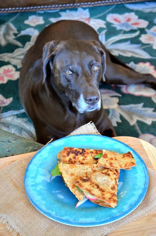 Swiss, Ham, Apple Quesadilla with Honey-Mustard, www.mountainmamacooks.com