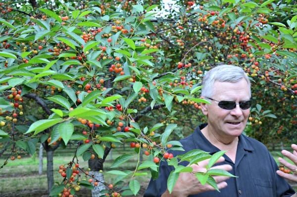 Mission Fruit Company, www.mountainmamacooks #stateofgreattaste