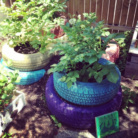 Growing Potatoes in Recycled Tires | The Goods | mountainmamacooks.com