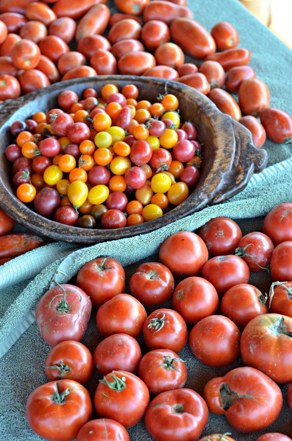Heirloom Tomato Sauce | mountainmamacooks.com #canningweek14