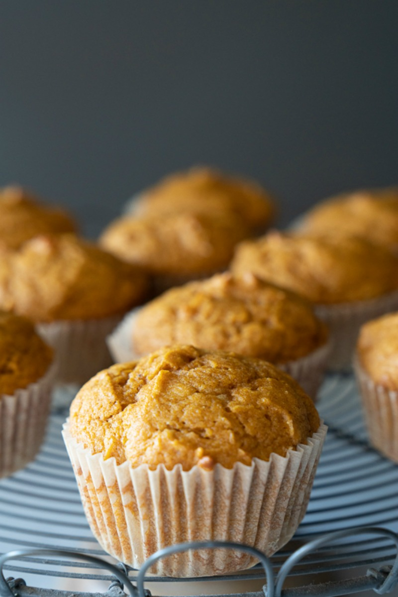A close up of a stand full of pumpkin muffins. A gray background. The muffins have great height, look moist, and fresh from the oven. www.mountainmamacooks.com