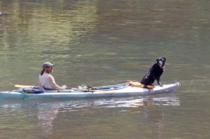 Drifting down the Greenbrier River with an owner and a kayak, the dog enjoys a first class seat. (Photo by Mark Robinson)
