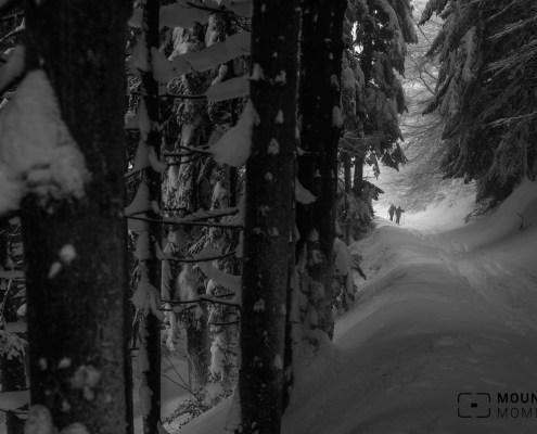 winter tirol wald