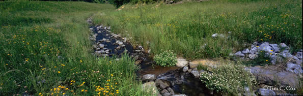 Restored Stream at Black Bear 1