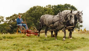 Mowing hay with horsepower in Lee County, VA