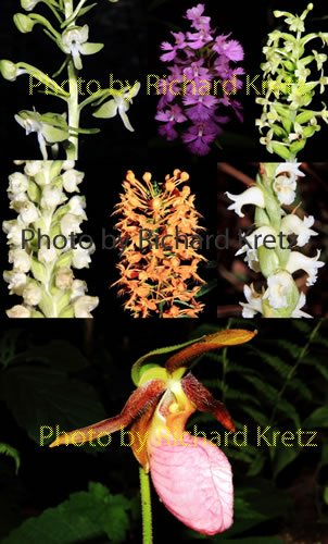 orchids_o