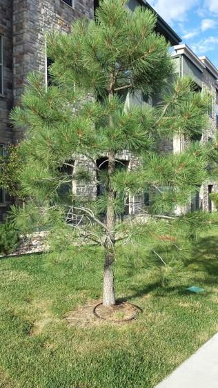 waterung tree 2