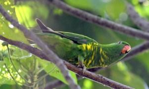 cattanawetlands-cairns-qld-australia_lah_4031