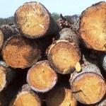 Log Cabin Log Type Yellow Pine