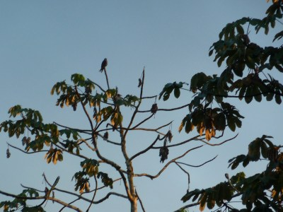 Bird Watching In The Amazon