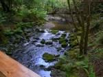 Creek Setting In Muir Woods - No Distress Here!
