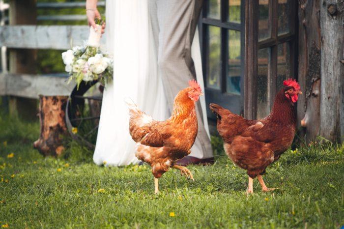 2 Chickens At A Wedding Sandpoint Idaho Mountain Wedding Amy Galbraith Photography   Via MountainsideBride.com