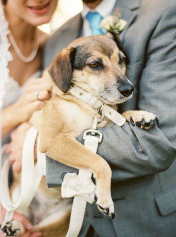 Wedding Dog | Mountain Wedding In Barboursville Virginia By JoPhoto | Via MountainsideBride.com
