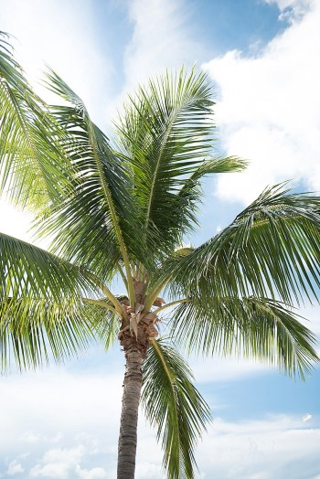 7b Abaco Bahamas Honeymoons