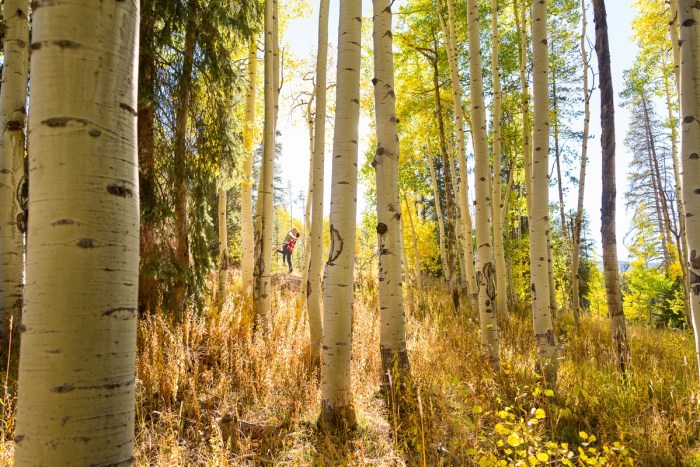 8 Fall Engagement In Vail Colorado Bergreen Photography Via MountainsideBride