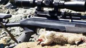 Bwalton pcp airgun hunting