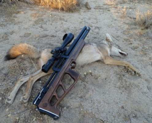 Airgun Coyote Hunt
