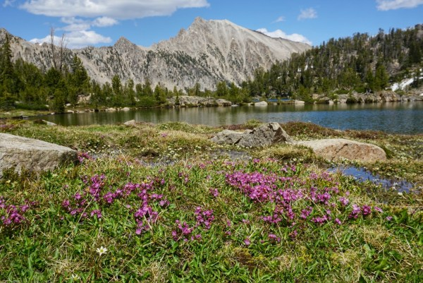 Wildflowers at boulder chain lakes
