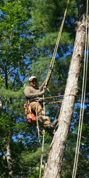 brevard north carolina tree services