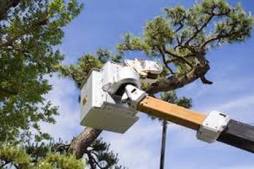 treemachine