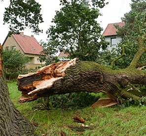 Fallen Tree and Broken Limbs