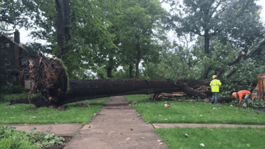 Image result for tree fell in yard