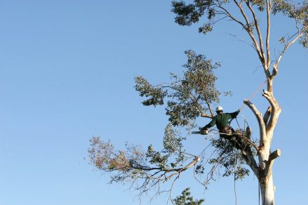 Image result for tree pruning in mountains