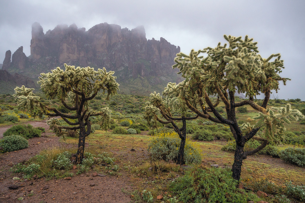 desert rain gloom mist