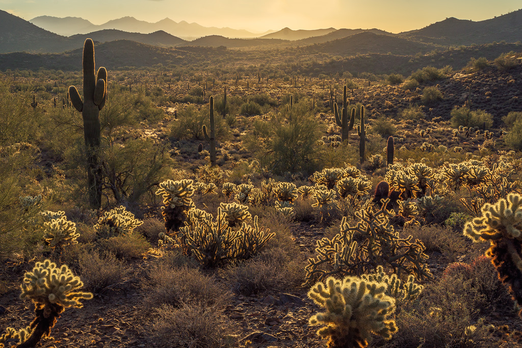 sonoran desert mountains nature
