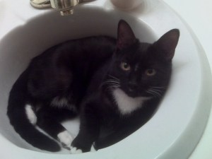 kitty cat photo contest