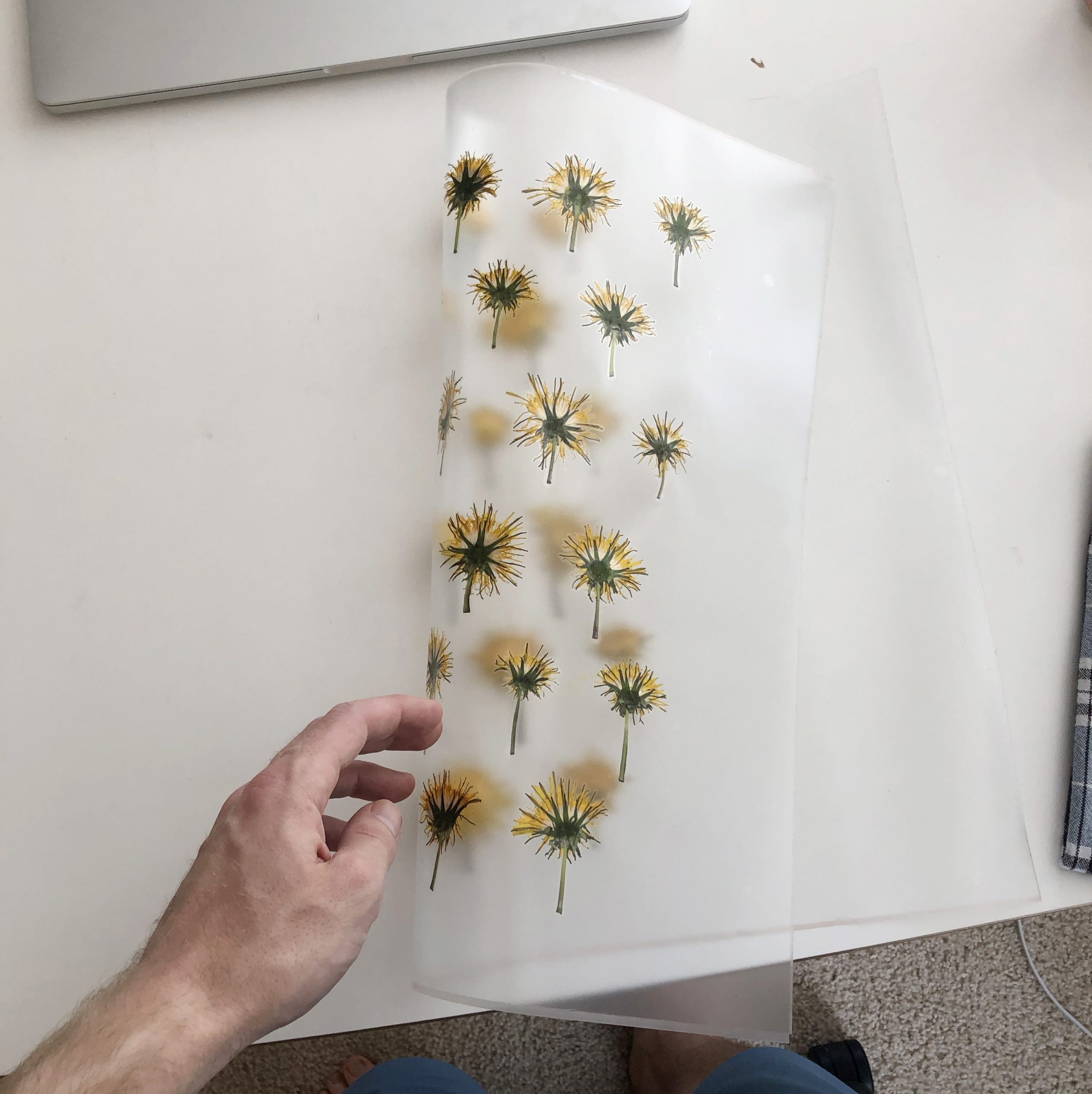 Yellow dandelion flowers and turned into book pages.