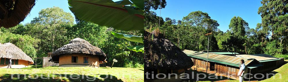 forest-exploration-mount-elgon