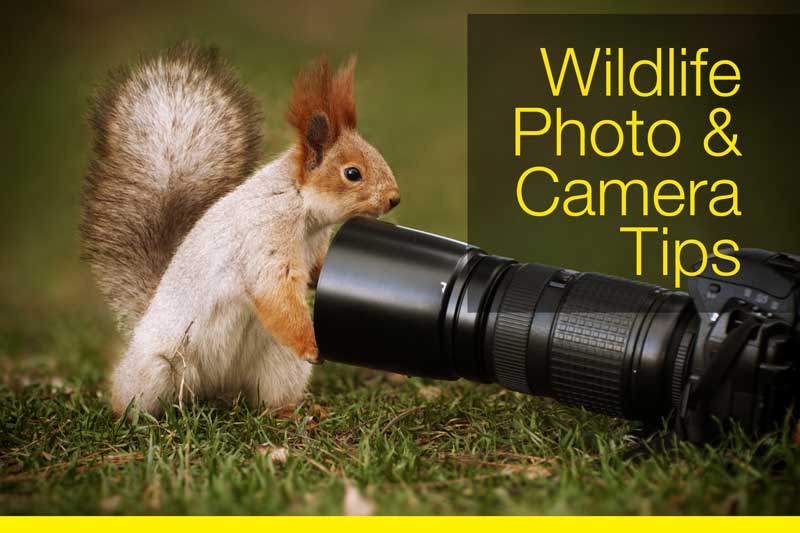 wildlife-photo-camera-tips