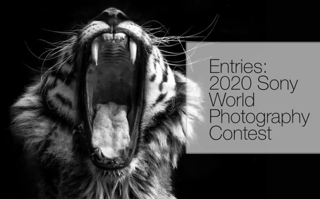 sony-world-photo-contest-2020