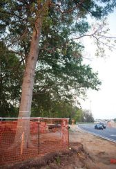 Johnnie Dodds Construction - Trees to be Saved