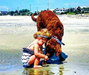 Huck the Chesapeake Bay Retriever, Sindy Orvig - East Cooper Pets