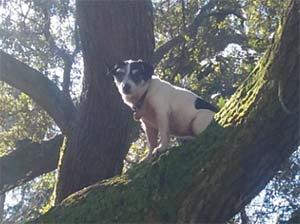 Kolby Evans the Jack Russell, Kathy Evans - East Cooper's Pets