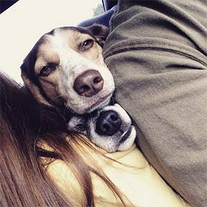 lizzy and daisy - brandon and ashley croy - mt pleasant pets